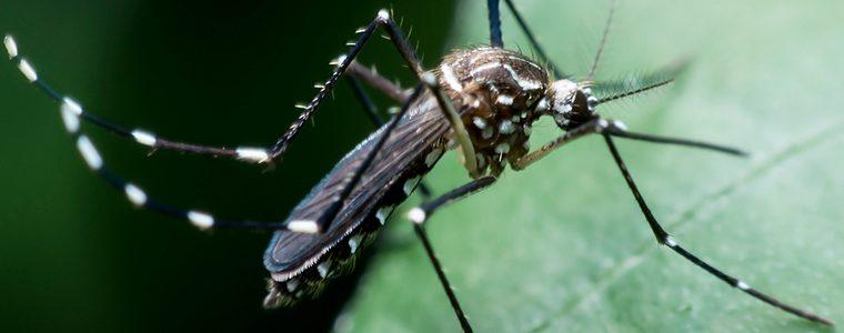 Chikungunya provoca inflamação cerebral grave