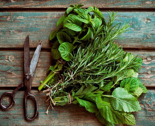 Consumo de ervas pode beneficiar o cérebro