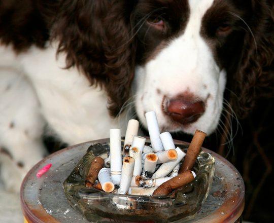 Fumar é prejudicial à saúde dos animais de estimação