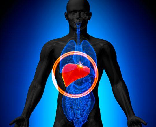 Função hepática: para que serve o fígado?