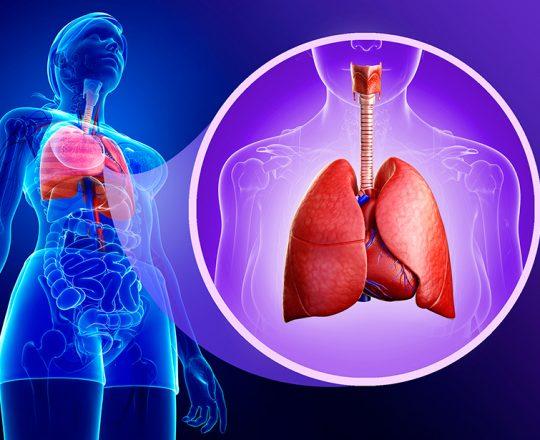 Função Pulmonar: o que fazem os pulmões