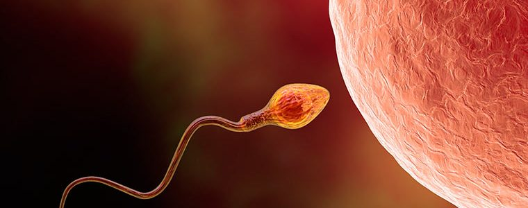 Inseminação Intrauterina X Fertilização In Vitro