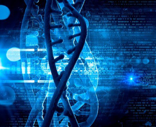 Novas técnicas ajudam embriões humanos a desenvolverem-se com sucesso