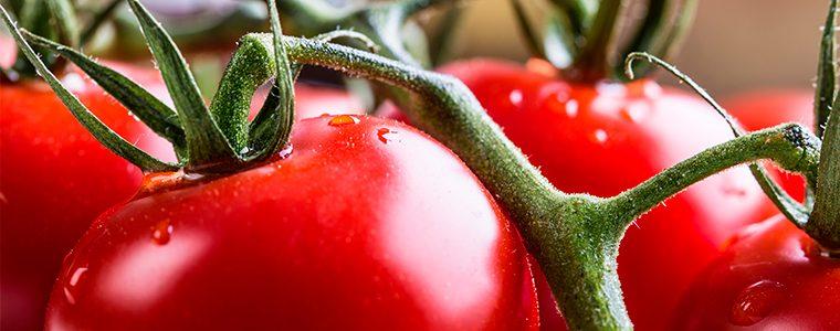 Tomate pode ter os mesmos benefícios de 50 garrafas de vinho tinto