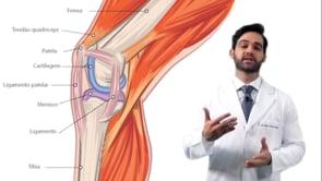 Quais são os ligamentos do joelho, e qual a sua importância?