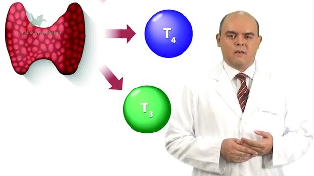 Quais são os principais problemas de funcionamento da tireoide?