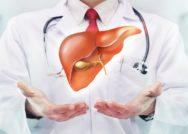 Hábitos de vida saudáveis preservam vitalidade do fígado